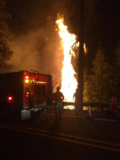 A nighttime photo showing the rear of a fire engine, a firefighter, and a tree being engulfed by red flames.