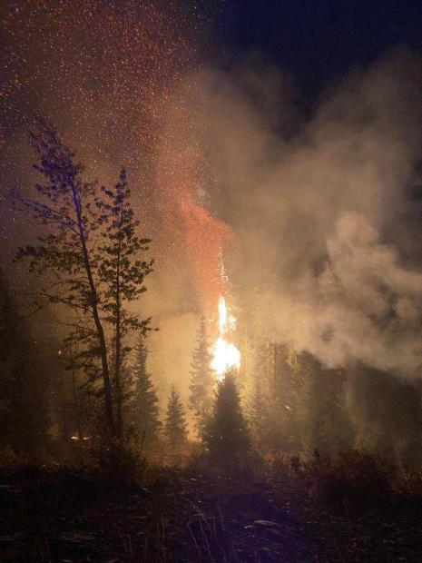 Embers float into the night sky from a tree that is engulfed with flames on the Cold Creek Fire late in the evening on Sept. 15, 2020.