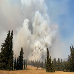 a timelapse of a smoke column on Forest Road 199 taken around 4:00 PM on August 29, 2021. This column shows the intensity of fire burning through a dense mixed confier (pine and fir) forest with an over abundance of standing dead trees