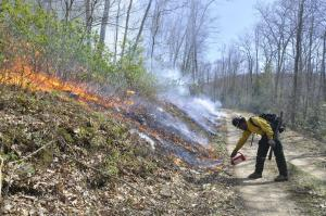 Firefighter standing on a dirt road uses a drip torch to drop fire on a leaf-covered hillside.
