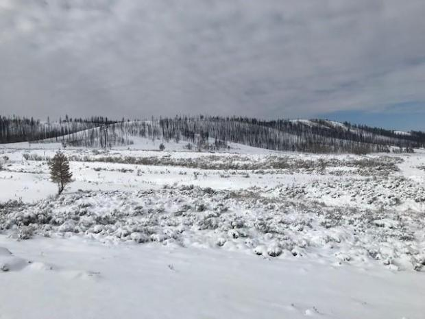 Snow-covered foreground with burned forest on hillside in the background